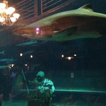 Tubarões!