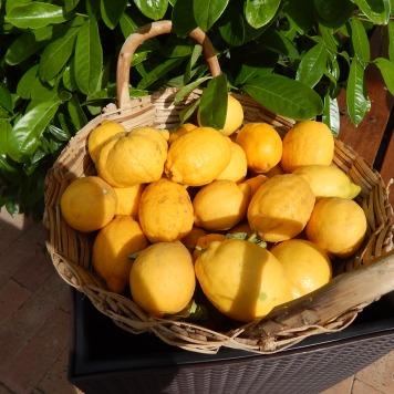 Limões na cesta
