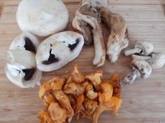 Os cogumelos