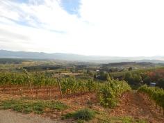Parte dos vinhedos